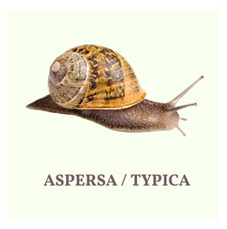 aspersa-typica